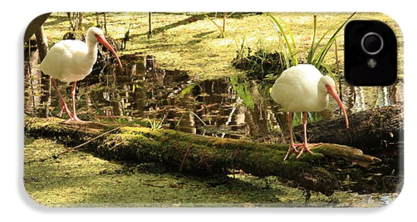 Two Ibises On A Log IPhone 4 / 4s Case by Carol Groenen