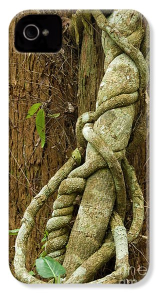 IPhone 4 Case featuring the photograph Vine by Werner Padarin