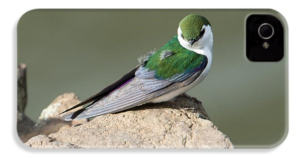 Violet-green Swallow IPhone 4 Case