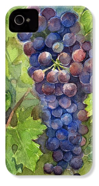 Watercolor Grapes Painting IPhone 4 / 4s Case by Olga Shvartsur