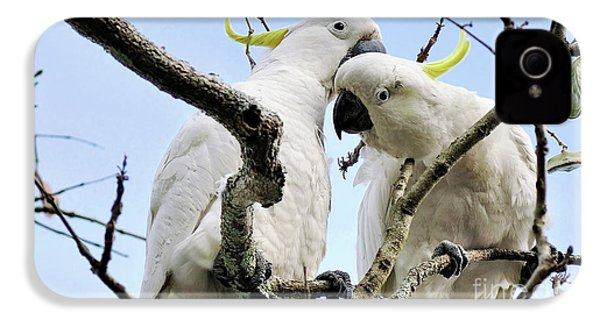 White Cockatoos IPhone 4 Case by Kaye Menner