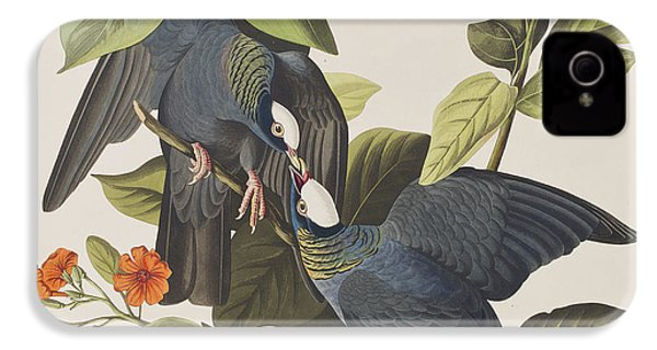 White Crowned Pigeon IPhone 4 / 4s Case by John James Audubon