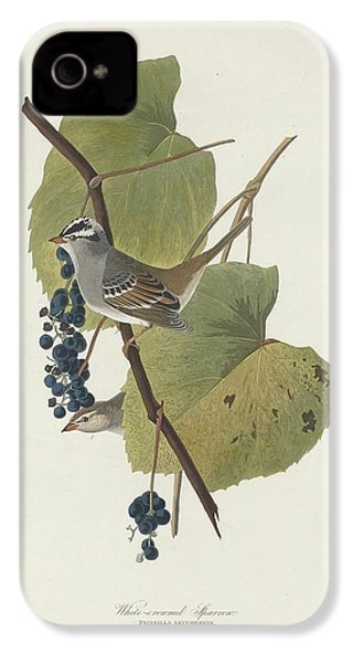 White-crowned Sparrow IPhone 4 Case by Rob Dreyer