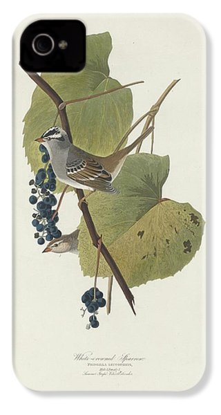 White-crowned Sparrow IPhone 4 / 4s Case by Anton Oreshkin