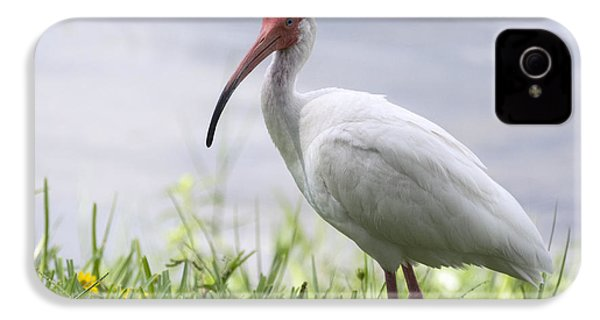 White Ibis  IPhone 4 / 4s Case by Saija  Lehtonen