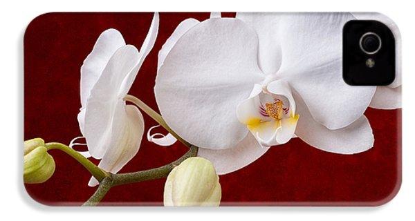White Orchid Closeup IPhone 4 Case by Tom Mc Nemar