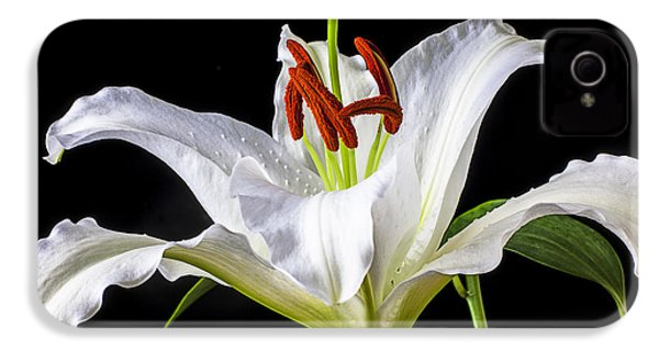 White Tiger Lily Still Life IPhone 4 / 4s Case by Garry Gay
