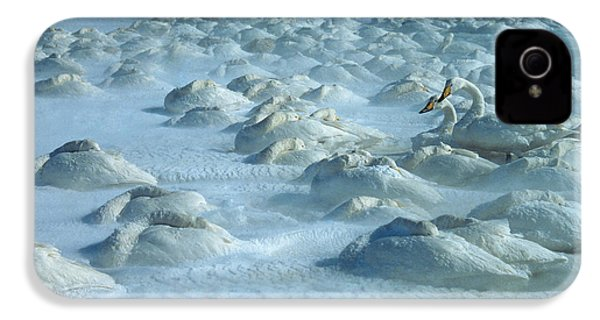 Whooper Swans In Snow IPhone 4 Case by Teiji Saga and Photo Researchers