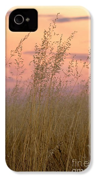 IPhone 4 Case featuring the photograph Wild Oats by Linda Lees