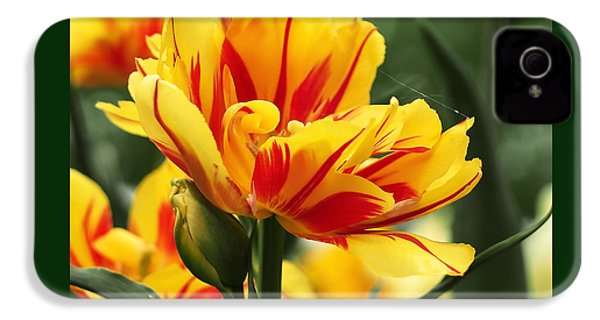 Yellow And Red Triumph Tulips IPhone 4 / 4s Case by Rona Black