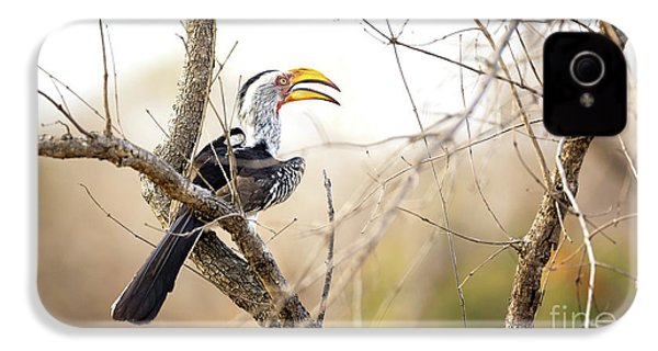 Yellow-billed Hornbill Sitting In A Tree.  IPhone 4 Case by Jane Rix