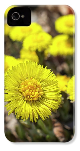 IPhone 4 Case featuring the photograph Yellow Coltsfoot Flowers by Christina Rollo