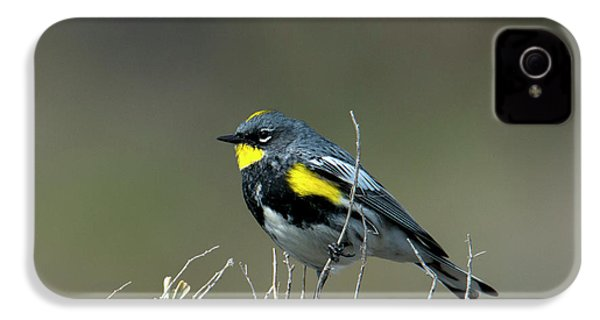 Yellow-rumped Warbler IPhone 4 Case by Mike Dawson