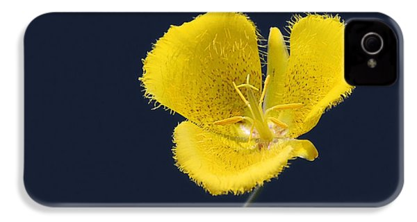 Yellow Star Tulip - Calochortus Monophyllus IPhone 4 Case by Christine Till