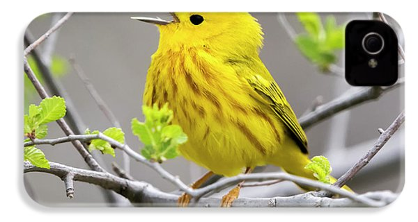 Yellow Warbler  IPhone 4 Case by Ricky L Jones