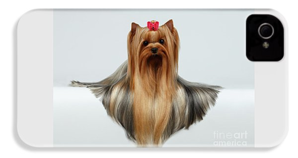 Yorkshire Terrier Dog With Long Groomed Hair Lying On White  IPhone 4 Case by Sergey Taran
