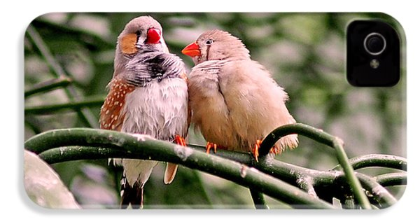 Zebra Finch Colloquy IPhone 4 Case by Rona Black