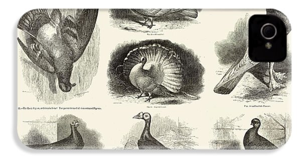 1868 Darwin Pigeon Breeds Illustration IPhone 4s Case by Paul D Stewart