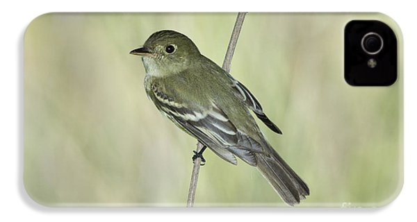 Acadian Flycatcher IPhone 4s Case by Anthony Mercieca