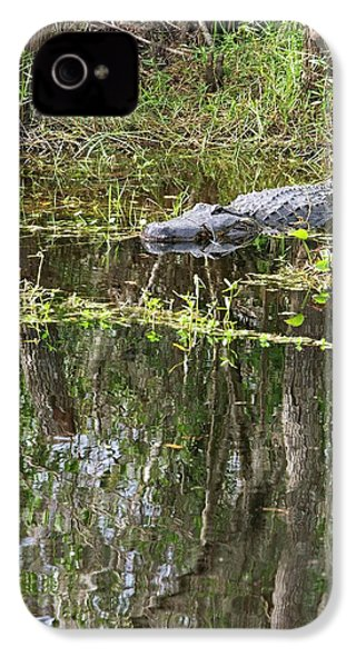 Alligator In Swamp IPhone 4s Case by Jim West