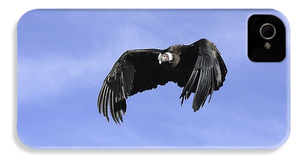 Andean Condor IPhone 4s Case by M. Watson