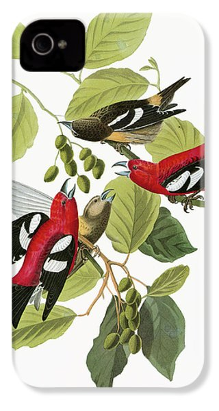 Audubon Crossbill IPhone 4s Case by Granger