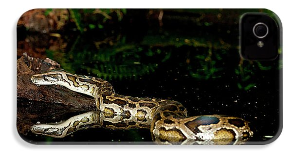 Burmese Python, Python Molurus IPhone 4s Case by David Northcott