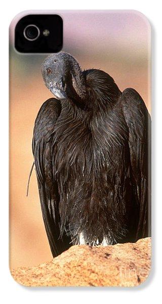 California Condor IPhone 4s Case