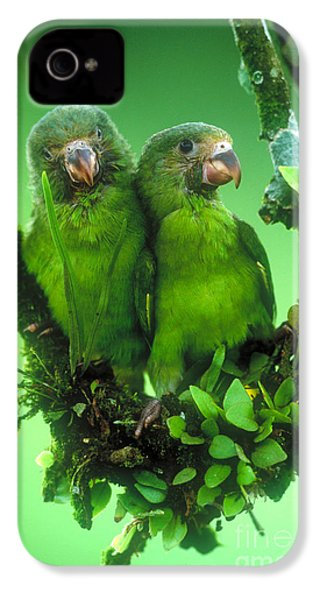 Cobalt-winged Parakeets IPhone 4s Case by Art Wolfe