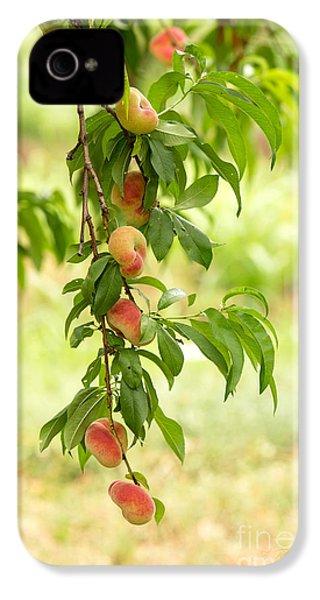 Donut Peaches IPhone 4s Case by Iris Richardson