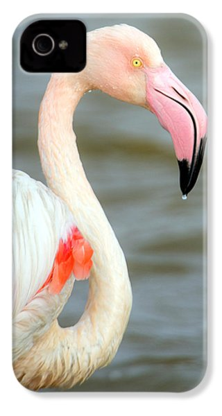 Greater Flamingo Phoenicopterus Roseus IPhone 4s Case by Panoramic Images
