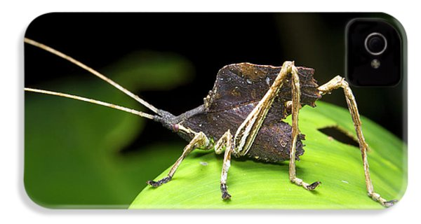 Leaf Mimic Bush-cricket IPhone 4s Case by Dr Morley Read