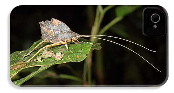 Leaf Mimic Katydid IPhone 4s Case by Dr Morley Read