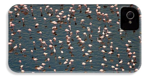 Lesser Flamingo, Lake Nakuru, Kenya IPhone 4s Case by Panoramic Images