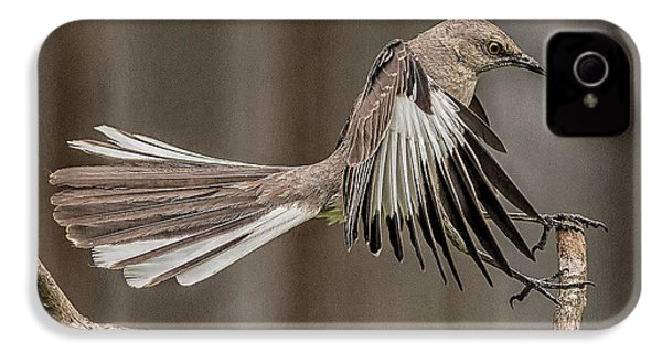 Mockingbird  IPhone 4s Case by Rick Barnard
