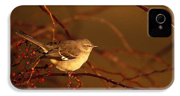 Northern Mockingbird Mimus Polyglottos IPhone 4s Case by Paul J. Fusco