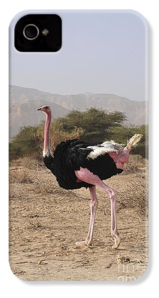 Ostrich In A Nature Reserve IPhone 4s Case by PhotoStock-Israel