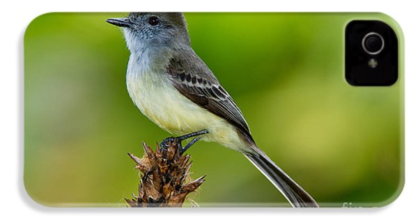 Pale-edged Flycatcher IPhone 4s Case by Anthony Mercieca