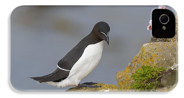 Razorbill IPhone 4s Case by John Shaw