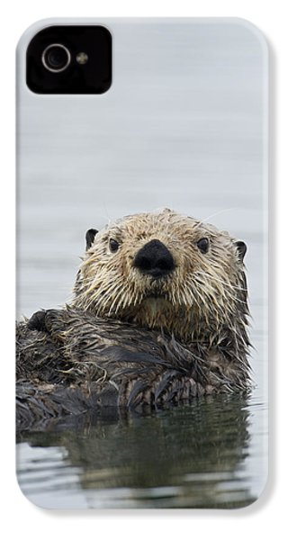 Sea Otter Alaska IPhone 4s Case by Michael Quinton