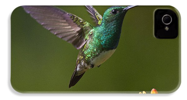 Snowy-bellied Hummingbird IPhone 4s Case by Heiko Koehrer-Wagner