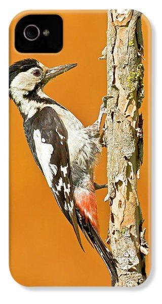 Syrian Woodpecker (dendrocopos Syriacus) IPhone 4s Case