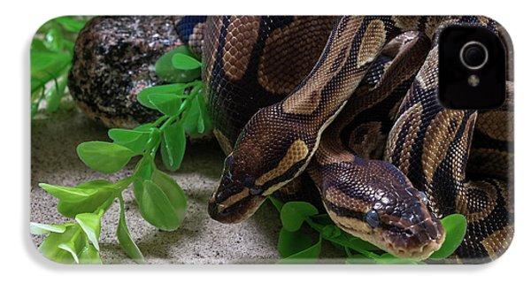 Two Burmese Pythons Python Bivittatus IPhone 4s Case