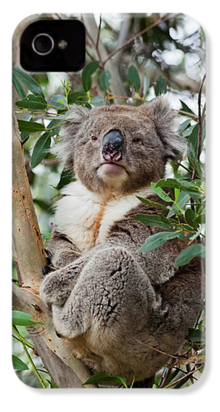 Koala (phascolarctos Cinereus IPhone 4s Case by Martin Zwick