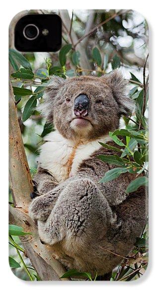 Koala (phascolarctos Cinereus IPhone 4s Case by Martin Zwick