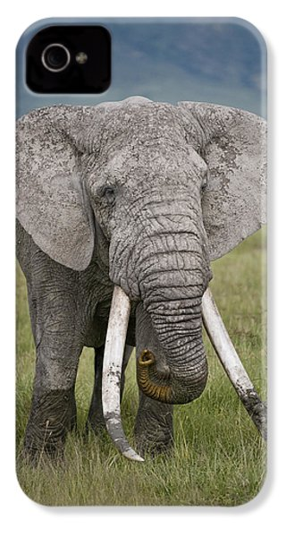 African Elephant Loxodonta Africana IPhone 4s Case by Panoramic Images