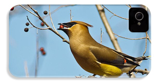 Cedar Waxwing With Berry IPhone 4s Case by Robert Frederick