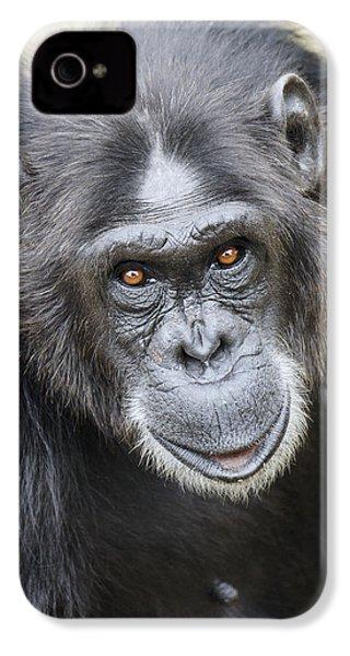 Chimpanzee Portrait Ol Pejeta IPhone 4s Case