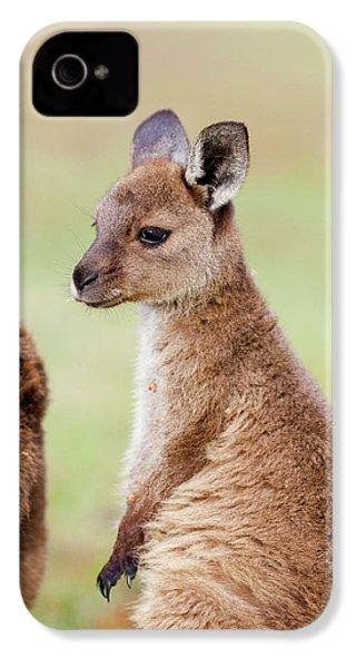 Western Grey Kangaroo (macropus IPhone 4s Case by Martin Zwick