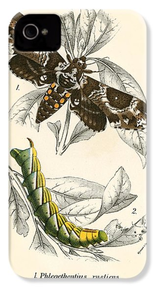 Butterflies IPhone 4s Case by English School